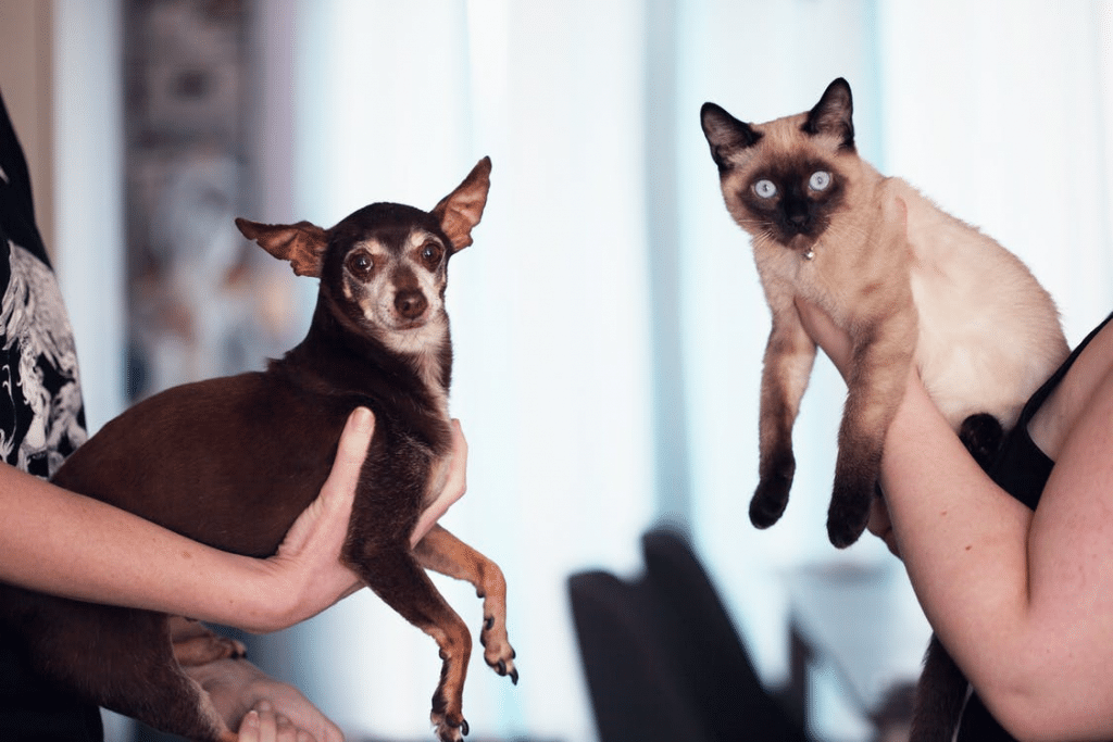 A dog and Siamese cat