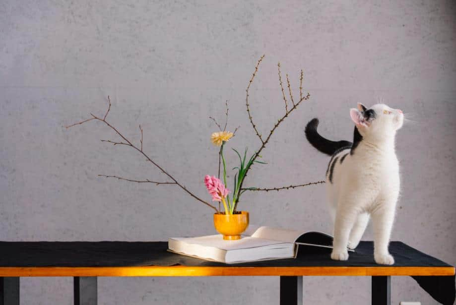 Common Siamese Cat Skin Problems and How to Prevent Them